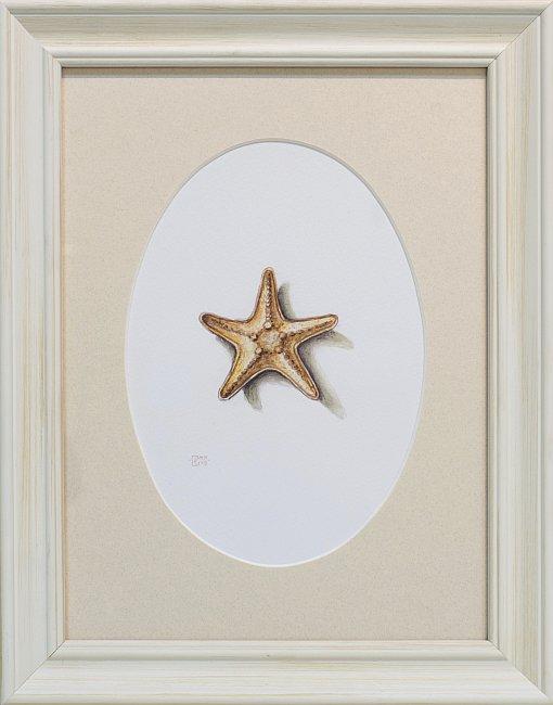 Iskren Semkov- Object-Starfish-24x18-framed-28x22