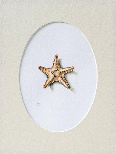 Iskren Semkov- Object-Starfish-24x18