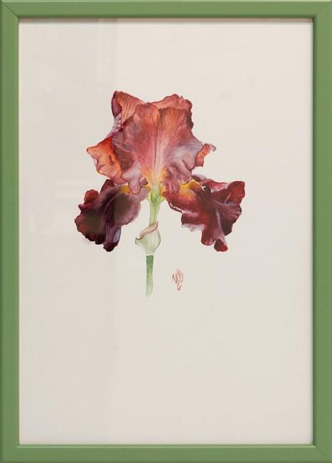 Tsvetelina Hristova - akvarel- Irisi-4-30x20cm