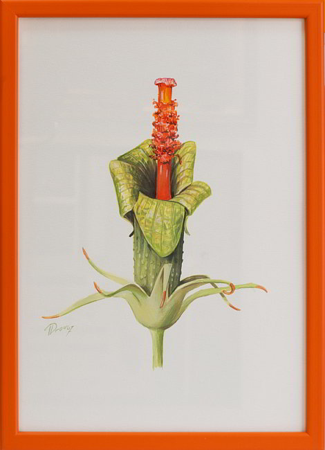 Druzhinin- Hibiskus, 32.5x23cm