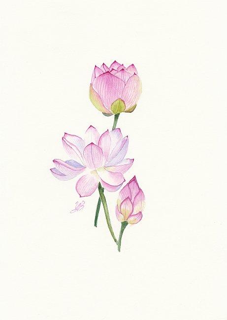 TZVETELINA-Botanica-05-30x20cm