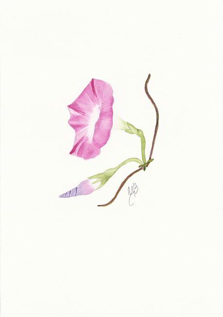 TZVETELINA-Botanica-aquarelle-10