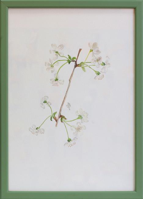 TZVETELINA-Botanica-aquarelle-11-framed